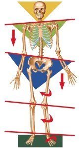 Bone-structure-off-balance-168x300